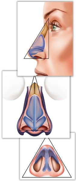 Introduktion till näskirurgi