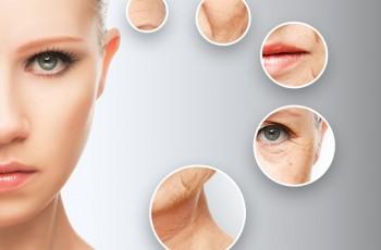 Om huden och hur rynkor bildas